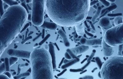 microbiotas terapia neural y medicina biológica