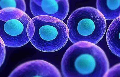 nutrición celular y terapia neural