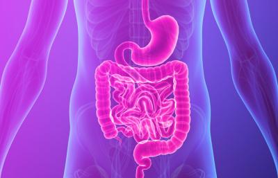 LA MICROBIOTA INTESTINAL : NUESTRAS BACTERIAS AMIGAS marga sirvent terapia neural alicante